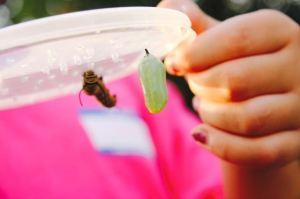 Caterpillar cris.